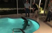 MISSISSIPPI - Florida'da Havuzda Timsah Bulundu