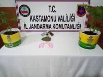 SULUCA - Kastamonu'da Ev İçerisine Kurdukları Serada Uyuşturucu Yetiştirdiler