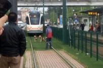 Tramvaya Kurt Köpeği Eskortu