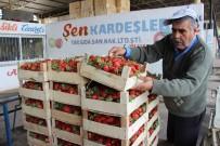 BAHAR HAVASI - Aydın'da Yaz Çileği Hasadı Başladı