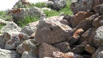 Baharın Gelmesiyle Ani Örenyeri'deki Doğa Canlandı