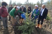 Bolu'da, Yanan 250 Hektarlık Alan Tekrar Yeşillendirildi
