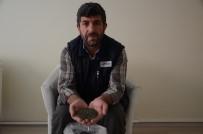 KEMİK ERİMESİ - Çok fazla bilinmeyen şifa deposu bitki
