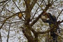 KUŞ YUVASI - Görele Belediyesi'nden  Kuş Yuvası