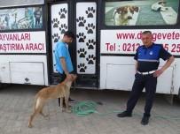 SOKAK KÖPEKLERİ - Hisarcık'ta Sokak Köpekleri Kısırlaştırılıyor
