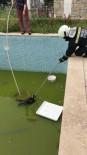 İtfaiye Havuza Düşen Kedi İçin Seferber Oldu
