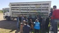 MURAT GIRGIN - Kaman'da Genç Çiftçilere Küçükbaş Hayvan Dağıtımı Yapıldı