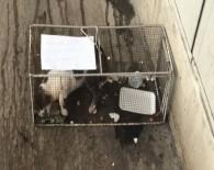 Kediye Kafes Cezası !