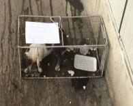 Markete Giren Kediyi Kafese Hapsettiler