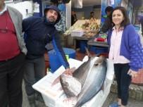 Mudanya'da Balıkçıların Ağına 1 Metrelik 'Akya' Takıldı