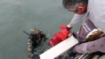 Muğla'da Deniz Dibi Temizliği Sürüyor
