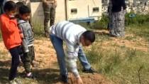 GÖZ YAŞARTICI GAZ - Filistinli Gençler İsrail İşgalindeki Topraklara Zeytin Ağaçları Dikti