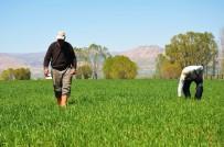 YAĞAN - Muş'ta Erken Ekim Yapan Çiftçilerin Yüzü Gülüyor