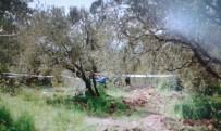 HALİL MUTLU - Ağacın Dalı Hayatına Mal Oldu