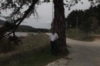 Bin 450 Rakımlı Gölcük Yaylası Ziyaretçilerini Bekliyor