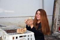 BROWN - Kabadüz Ziraat Odası Çiftçilere Tavuk Dağıttı