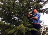 'Kuşlar Üşümesin' Diye Ağaçlara Yuva Koydular