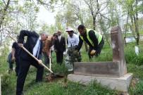 ÇAM AĞACI - Muş Belediyesinden Yeşillendirme Çalışması