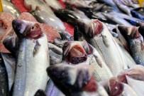 1 EYLÜL - Balıkçıların Hayali Bir Başka Sezona Kaldı