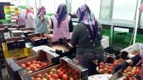 Manisa'dan Rusya'ya Domates İhracatı Başladı