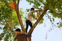 TOSMUR - Türk Ve Suriyeli Öğrenciler Kampüsteki Ağaçlara Kuş Yuvaları Yerleştirdi