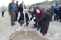 ÇAM AĞACI - Zeytin Dalı Harekatı Şehitleri İçin 'Akçaağaç' Dikildi