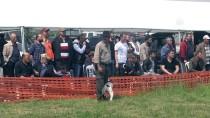 AV KÖPEĞİ - '10. Fermalı Av Köpekleri Mera Yarışması'