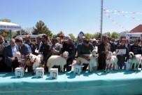 Malatya'da 'En Güzel Kuzu' Yarışması