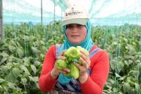 Mersin'de Çiftçiler, Biber Fiyatlarından Dertli