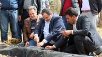 (Özel) Aksaray'da Çilek, Üreticinin Yüzünü Güldürüyor