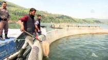 1 EYLÜL - Tezgahlar 'Kültür Balıkları'yla Canlandı