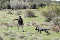 OTORITE - Köpekli Arama Timleri Afyonkarahisar'da Yarıştı