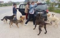SOKAK KÖPEKLERİ - Öğrencileri İle Sokak Köpeklerine Sahip Çıktı