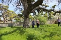 Vali Nayir, 5 Asırlık Meşe Ağacını İnceledi