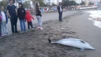 KALKAN BALIĞI - Yılmaz Açıklaması 'Yunus Ölümleri Balıkçı Ağlarından Kaynaklanıyor'