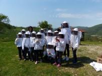 Çocuklara Arı Ve Arıcılık Anlatıldı