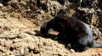 Fare Avcısı İlk Defa Gördüğü Yılandan Korktu