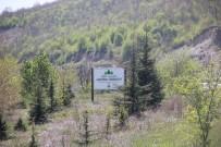 Final Hatıra Ormanı Yeni Üyelerine Kavuştu