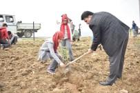 ŞEREF AYDıN - Kocaseyit'te Fidanlar Toprakla Buluştu