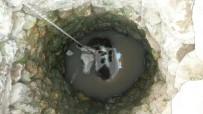 KOZLUCA - Su Kuyusuna Düşen İnek Kurtarıldı