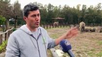 İZMIR DOĞAL YAŞAM PARKı - Vahşi Hayvanlara 'Bebek' Gibi Bakıyorlar