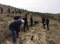 FIRAT KALKANI - Bayburt'ta Şehitler İçin Hatıra Ormanı Oluşturuldu
