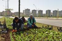 Büyükşehir, 4 Milyon Yazlık Mevsimlik Çiçek Dikecek