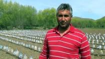 ÖMER KıLıÇ - Çiftçiden Zirai Dona Karşı İlginç Koruma