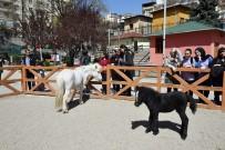 MUHABBET KUŞU - Evcil Hayvanlar Başkentlileri Bekliyor