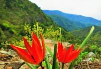 KAZDAĞLARI - Kazdağları Çiçek Açtı