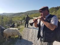 Keçiler Zurnayla Otluyor