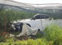 Lüks Otomobil Domates Serasına Daldı