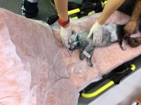KALP MASAJI - Yangından Kurtarılan Kedi, Kalp Masajıyla Hayata Tutundu