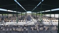 Yeni Hayvan Pazarının İhalesi Yapıldı